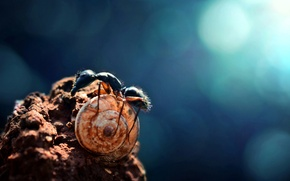 Picture nature, snail, Ant, bokeh