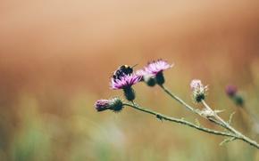 Wallpaper macro, bee, bokeh, flowers