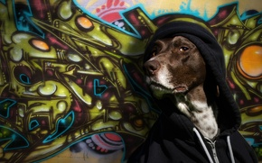 Picture look, wall, graffiti, dog, hood