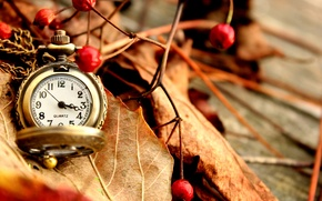 Picture autumn, leaves, berries, watch, dry, red, pocket