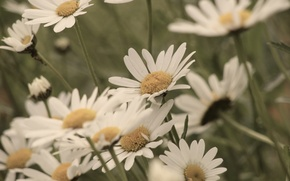 Picture white, flowers, yellow, green, background, widescreen, Wallpaper, petals, wallpaper, flowers, flower, widescreen, background, full screen, ...