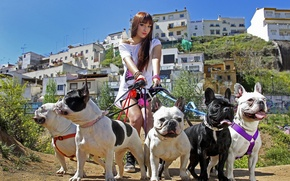 Picture dogs, girl, walk