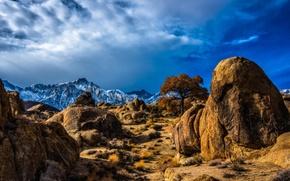 Picture snow, mountains, nature, stones, desert, tops, plants