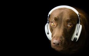Picture look, each, dog, headphones