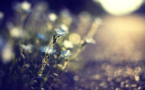 Picture flowers, macro, earth, light, nature, plants, road, blur, blue, the sun, glare, grass, track, stones