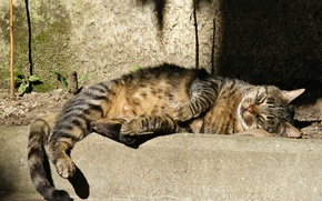 Picture cat, grey, sleeping, striped, street