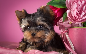Picture necklace, puppy, peonies, Yorkshire Terrier