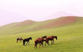 Picture landscape, hills, glade, Horse, walk
