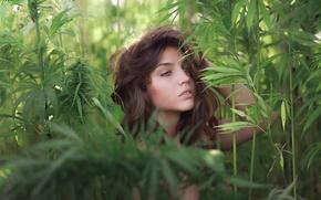 Picture greens, look, portrait, Inja Zalta