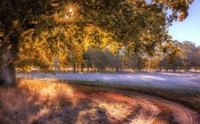 Wallpaper fog, road, field, tree, autumn
