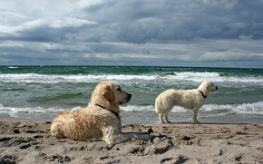 Picture sea, dogs, background