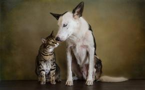 Picture cat, cat, style, retro, portrait, dog, treatment, friendship, pair, friends, Wallpaper from lolita777, boys