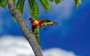Picture the sky, leaves, clouds, tropics, Palma, blue, parrot, multicolor lorikeet