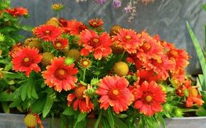 Picture leaves, petals, garden, yard, flowerbed