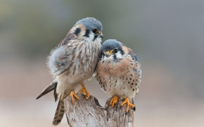 Picture love, birds, tenderness