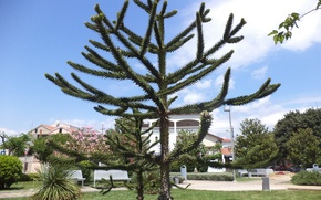 Picture green, tree, blue sky, Croatia, Vodice