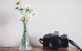 Picture flowers, background, camera