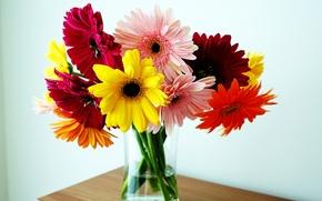 Picture bouquet, vase, gerbera