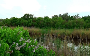 Picture forest, flowers, Bush, The evening, lilac, river dawn