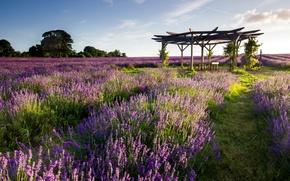 Picture field, landscape, lavender, watch