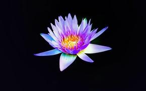 Picture flower, purple, petals, bloom
