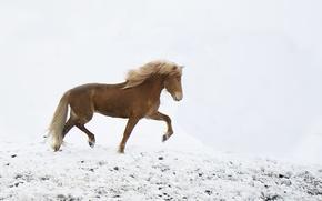 Wallpaper walking, the wind, horse, snow, winter