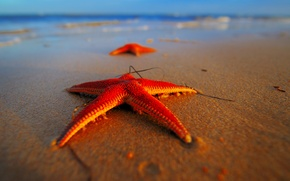Wallpaper sea, beach, stars, macro, red