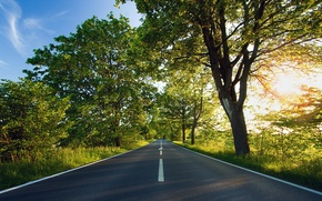 Wallpaper the sun, road, trees, green