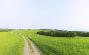 Wallpaper beauty, horizon, greens, dal, Road