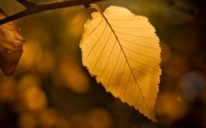 Wallpaper bokeh, sheet, autumn, leaf