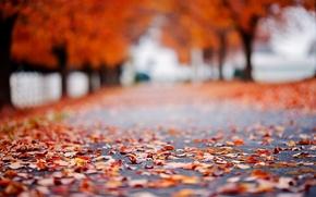Picture road, autumn, asphalt, leaves, macro, trees, background, tree, Wallpaper, foliage, blur, wallpaper, leaves, road, trees, …