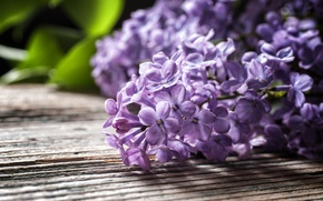 Picture leaves, table, branch, lilac