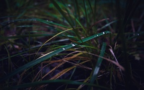 Picture autumn, grass, drops, macro, Russia, dobraatebe