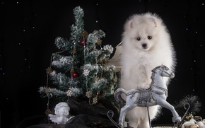 Picture white, horse, holiday, new year, spruce, angel, puppy, Spitz