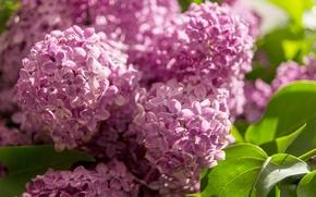 Picture macro, purple, lilac