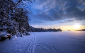 Picture winter, field, snow, landscape