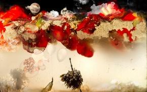 Picture red, moon, water, flowers, aquarium