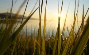 Picture rays, happiness, dawn, heat, freshness, Baikal, greens, lake, Rosa, the sun, grass