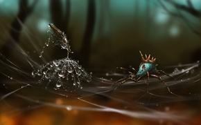 Picture drops, dandelion, web, spider, art