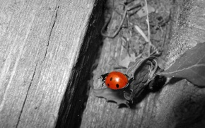 Picture white, black, Beetle, red