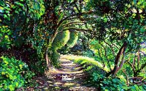 Picture road, cat, leaves, trees, nature, shadow, art, Hikaru no tube