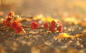 Picture asphalt, leaves, macro, flowers, red, background, earth, widescreen, Wallpaper, roses, wallpaper, flowers, wreath, flower, widescreen, ...