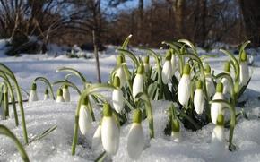 Wallpaper flowers, heat, mood, primroses, spring, thawed