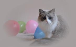 Wallpaper cat, look, balls