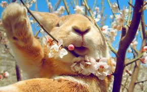 Picture the sky, spring, rabbit, flowering