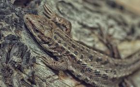 Picture eyes, legs, lizard, nostrils