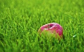 Picture grass, drops, Rosa, Apple