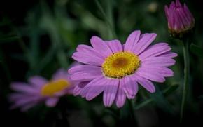 Picture grass, macro, nature, petals, stem