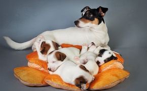 Picture dogs, comfort, house, background
