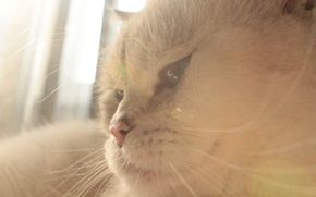 Picture white, eyes, cat, light, animal, day